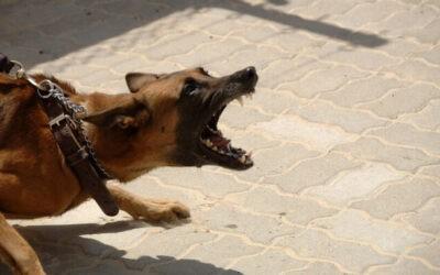 Kutyák viselkedési zavarai – avagy kell-e félnünk a kutyáktól?