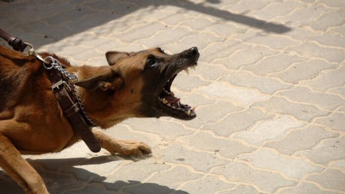 Kutya viselkedés zavarai