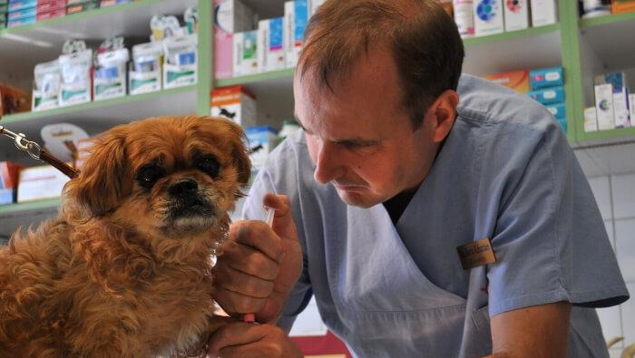 Kutyák védőoltásai
