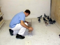 Madár állománydiagnosztika