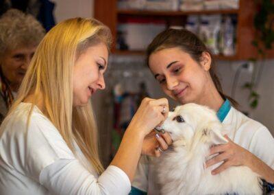 2 állatorvosi asszisztens egy kiskutyát vizsgál ki a rendelőben