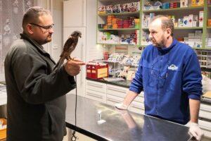 Ragadozó madár kivizsgálása Dr. Berta Krisztián által