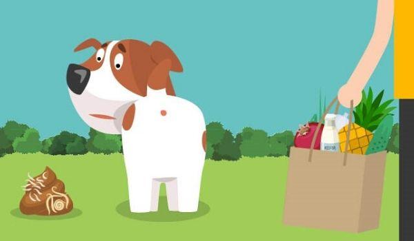 Kutyák féregtelenítése grafika