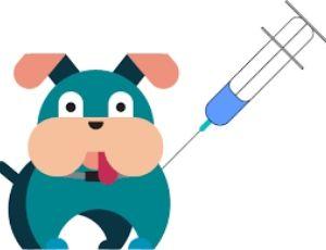 Kutyák védőoltásai injekció beadás