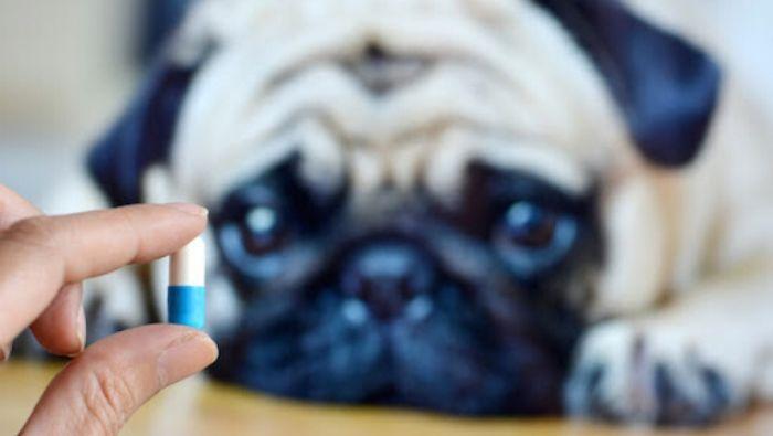 Otthoni gyógyszereink háziállatoknak