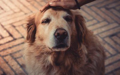 Idős állatok gondozása