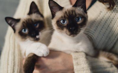 Macskák féregtelenítése