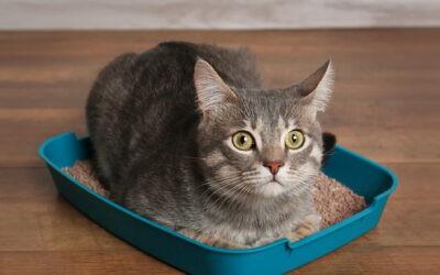Macskák gyakori betegsége: a húgyúti szindróma